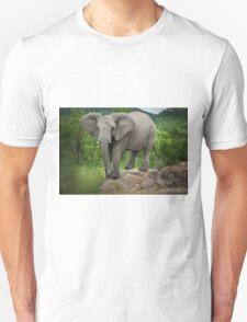 Posing I am (Elephant - loxodonta africana) T-Shirt