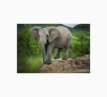 Posing I am (Elephant - loxodonta africana) Unisex T-Shirt