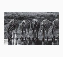 Drinking Zebra (Equus quagga) T-Shirt