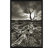 Pencil Pine Cementery Photographic Print