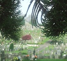 Peaceful walk through Jeanfield Cemetry  - Perth by ceroc99