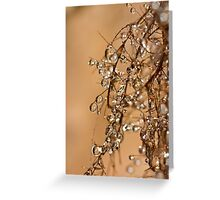 The delicate beauty that lies beneath us.... Greeting Card