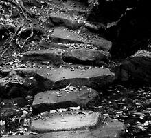 Stepping Stones, Bola Creek by Joe Glaysher