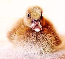 cute ducky by webgrrl