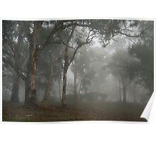 Trees in the Mist - Blakiston Poster