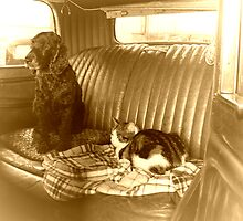 Back Seat Drivers by Angela Harburn