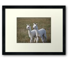 Alpaca Twin Framed Print