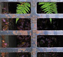 Life Behind Bars by Richard Ion