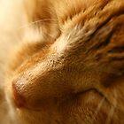 Tangerine Dream by Tanya B. Schroeder