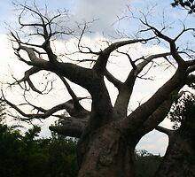 African Tree by Connie Kiskaden