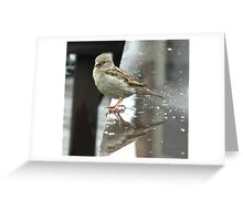 Just another rainy day Sparrow... Greeting Card