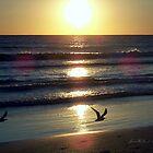 Golden Sunset by June Holbrook