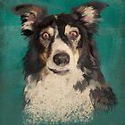 Quinn - border collie by Carl Conway