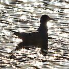 Sparkle Gull by Matt West