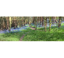 Bluebell Path 2 Photographic Print