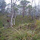 bushy vista at Cradle Mt, Tasmania by gaylene