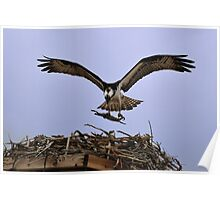 Osprey Nest Builders Poster