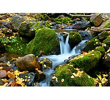 Leaves by the Stream Photographic Print