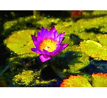 Vivacious Waterlily Impression Photographic Print