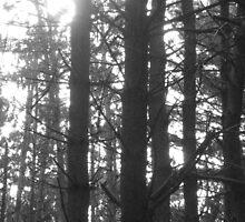 Sunlight in woods by ksteiling