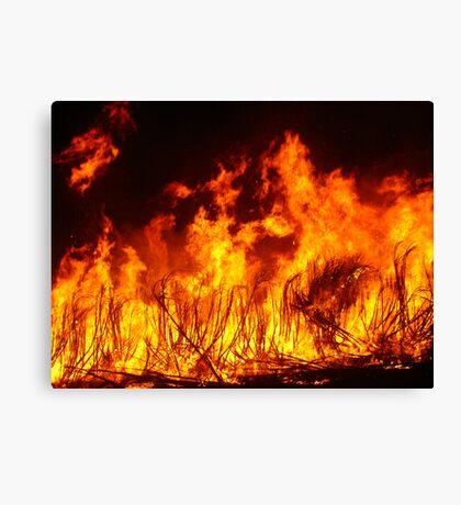 Spirited Cane Fire Canvas Print