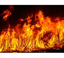Spirited Cane Fire Photographic Print
