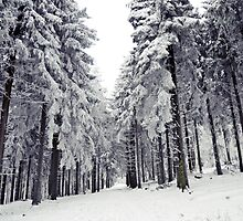 Winter wonderland by heinrich