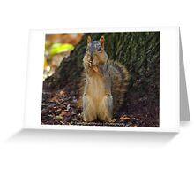 Pittsburgh Squirrel Greeting Card