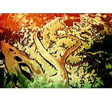 0947 Rainbow Serpent Photographic Print