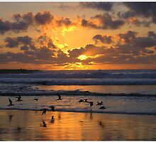 Golden Day - Pippi Beach, New South Wales by Deanna Roberts Think in Pictures