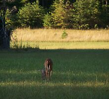 DEER IN TN  by ELIZABETH B