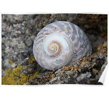 Little Shell Poster