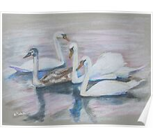 Swans and Cygnet, Crayons, Kensignton Palace Gardens' Round Pond Poster