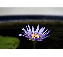 purple fire Photographic Print