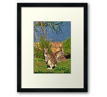 Burrinjuck Kangaroos Framed Print