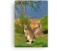 Burrinjuck Kangaroos Canvas Print