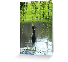 Our Neighbor, the Blue Heron  Greeting Card