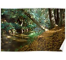 Autumn colours on Aire river Poster