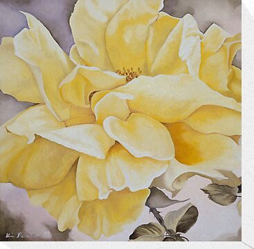 Yellow Rose by Kim Bender