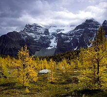 Autumn pines on Logan Pass by mcnamaraimages