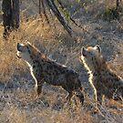 Hyena Cubs (Hyaenidae) by Deborah V Townsend