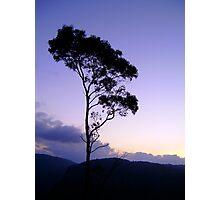 Purple tree silhouette Photographic Print