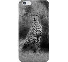 Cheetah (Acinonyx jubatus) iPhone Case/Skin