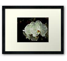 White Orchid 11 Framed Print