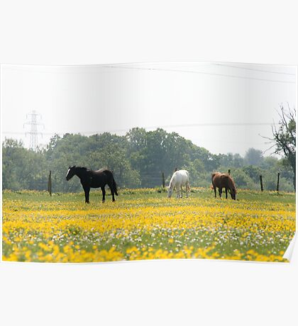 Buttercups and Horses Poster