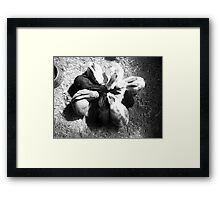 Bunnies getting together Framed Print