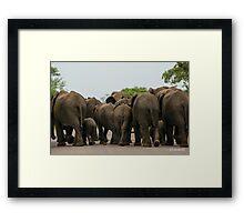 Elephants (Loxodonta africana) Framed Print