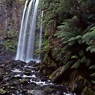 Hopetoun falls in the otway ranges by Mark Reed