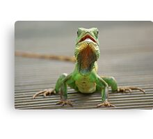 Little green reptile ! Canvas Print
