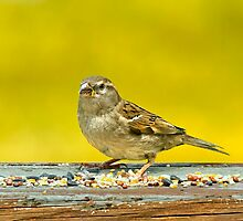 Just a Sparrow by Michael Wolf